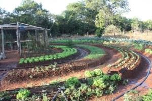 Hortas circulares concentram as energias das plantas num centro, que pode ter a sementeira, um local de lazer ou reservatório de água.
