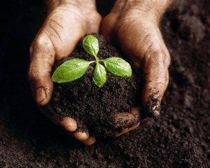 Com a natureza equilibrada, o vigor aumenta...a saúde e...
