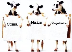 campanha-bovina