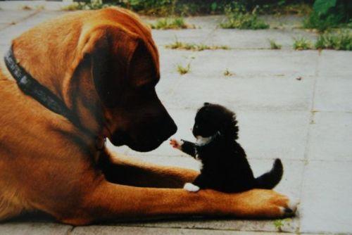 Resultado de imagem para imagens de amor entre animais diferentes