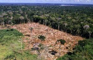 CASO 2: A ÚNICA FLORESTA AMAZÔNICA VAI DEIXANDO DE EXISTIR POR FAZENDEIROS CORRUPTOS QUE VENDEM A CARNE A PODEROSOS ESTRANGEIROS