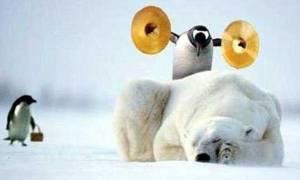 No Dia dos Animais: A VINGANÇA DO PINGUIM...