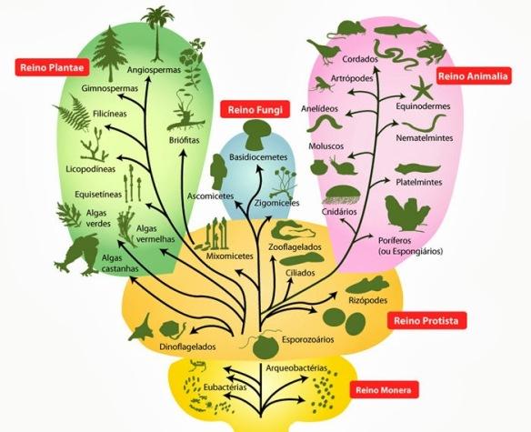 arvore-da-vida-biologica
