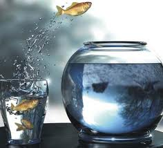 peixe coragem