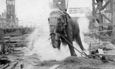 Topsy_elephant_death_electrocution_at_luna_park_1903-aaa-1000x600