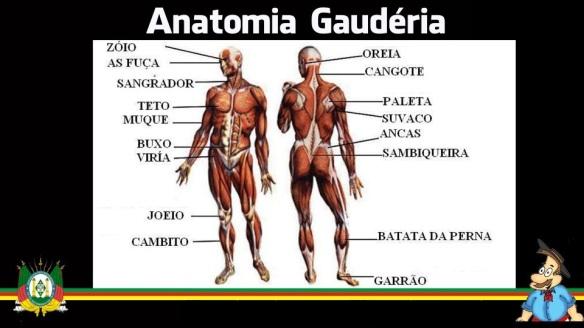 anatomia gaudéria