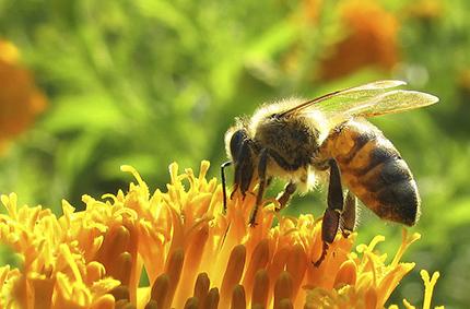 abelha-site